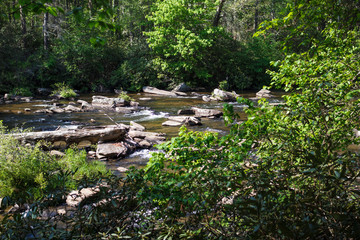 Mountain river with stones and logs in the forest. DuPont State Recreational Forest, NC, USA