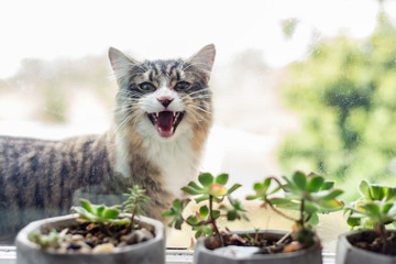 cat on windowsill outside, howling