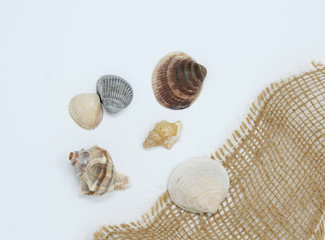 Shell on white background
