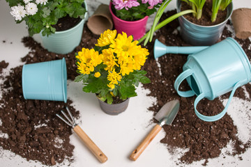 Image of soil, watering can, flower pot, shovel, rake