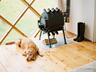 Dog relaxing at home
