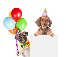 Dogs in birthday hats with balloons above white banner. isolated on white background