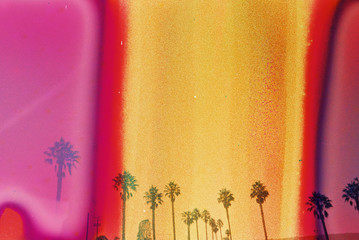 california palm trees with pink orange and yellow on film