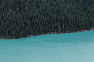 Abstract photo of glacier water and a wall of pine trees.