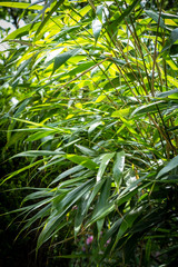 Bamboo tree leaves. Exotic plants, green, patterned background