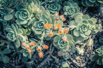 Beautiful succulent plants, close up