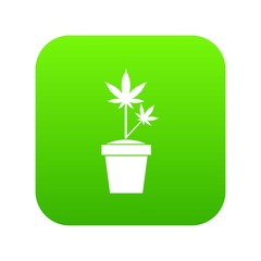 Hemp in pot icon digital green for any design isolated on white vector illustration