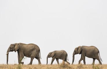 Elephants row