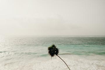 Palm Tree over Ocean