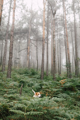Dog standing in the middle of forest