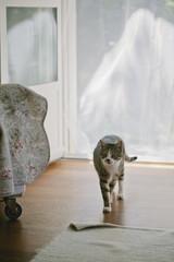 Cat walks inside home through garden door