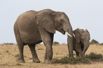Female elephant with her son