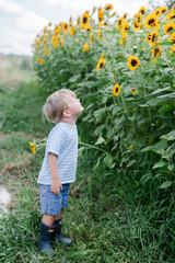 Boy in field of sunflowers