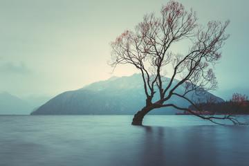 The Tree in Lake Wanaka, south Island, New Zealand landscape