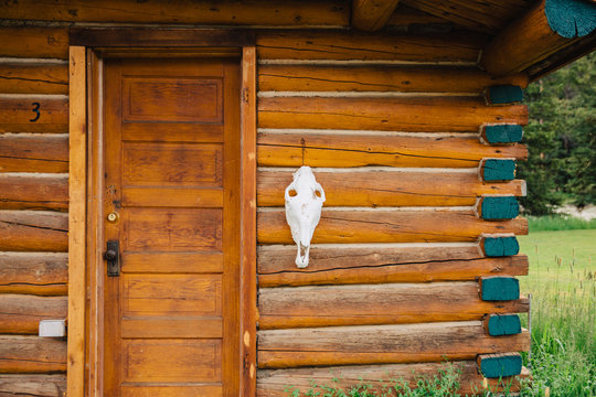 Animal skull hanging next to the door on a small cabin in the mountains.