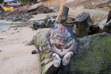 Cat stay on a timber at the beach.