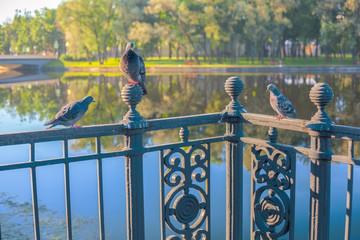Love triangle at birds