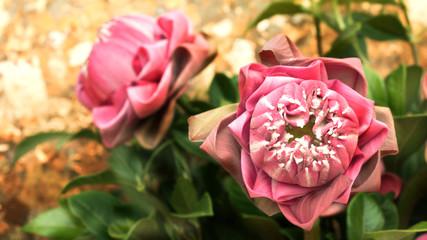 pink lotus flower dedicated to the buddha image.