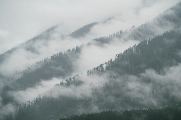 Foggy trees lines on Himalaya mountain surrounded by clouds