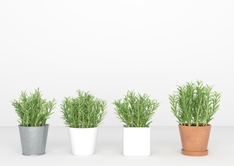 3d rendering little trees stand in a line