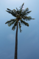 Alone palm tree against polarized blue sky background