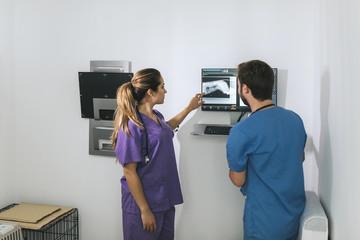 Veterinaries examining a dog's x-ray