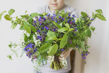 Wild forest meadow bouquet of cherry, lungwort, wild herbs in children's hands on a white background