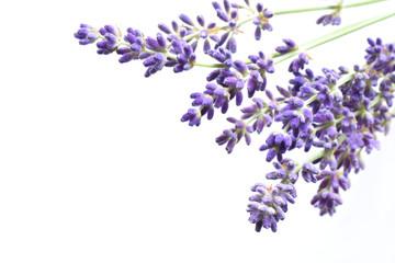 Schöne blumen von Lavendel Nahaufnahme
