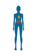 Female Body and Kidney Heart Vector Illustration