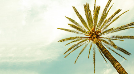 Palm Tree against sunny clear sky panoramic background. Photo cross processed for retro vintage look. Minimal image concept for summer vacation, tropical travel, sun and hot days.