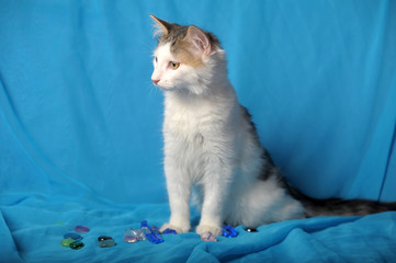 young cat turkish van