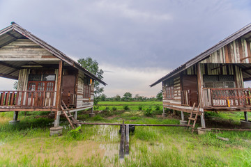 Rice Field and House , home stay