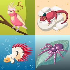 Exotic Pets 2x2 Design Concept