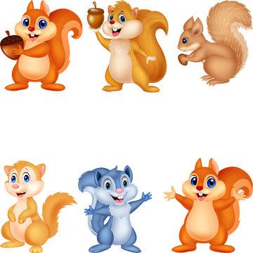 Cartoon squirrel collection set