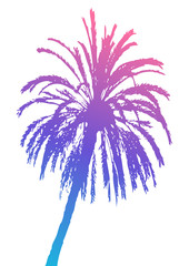 Palm tree silhouette isolated on white