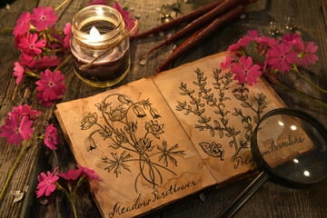 Primrose flowers with herbal candles and diary with drawings of magic plants on planks. Occult, esoteric and divination still life. Halloween background with vintage objects