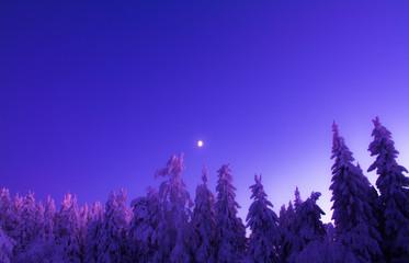 Foto auf Leinwand Dunkelblau Winter landscape from Sotkamo, Finland.