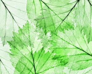 dark green thin leaves background