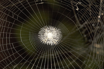 Spider web, Belianchip, Tripura , India