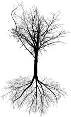bare black tree silhouette with large root