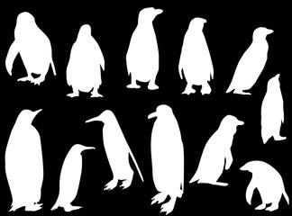twelve penguins isolated on black