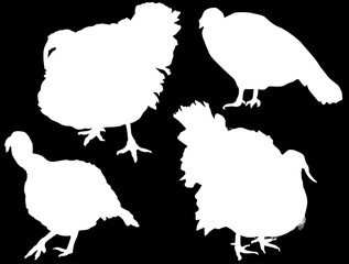 four turkey silhouettes isolated on black