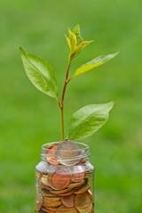 Das Geld wachsen lassen