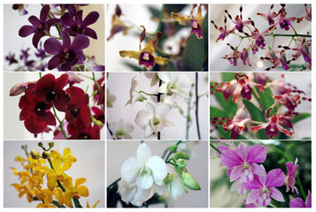 A combination photo shows the VIP orchids named after politicians and dignitaries at Singapore Botanic Gardens' National Orchid Garden