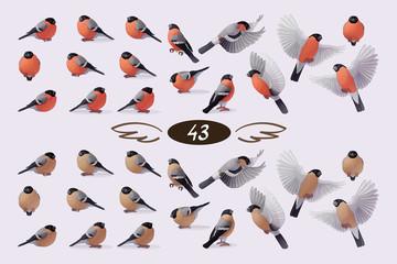 vector bullfinche finch bird family flock set