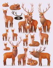 vector red deer (cervus elaphus) family flock set