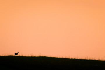 Kleines Reh in großer Landschaft blickt auf den Sonnenuntergang
