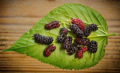 mulberry - Morus nigra - healthy fruit close up