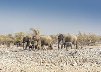 Elefantenherde, Etosha National Park, Namibia