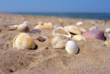 Sea and seashells. A lot of empty shells on the beach, close-up view.